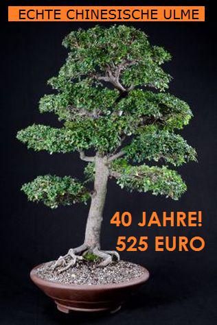 asiatische bonsai centrum hannover. Black Bedroom Furniture Sets. Home Design Ideas